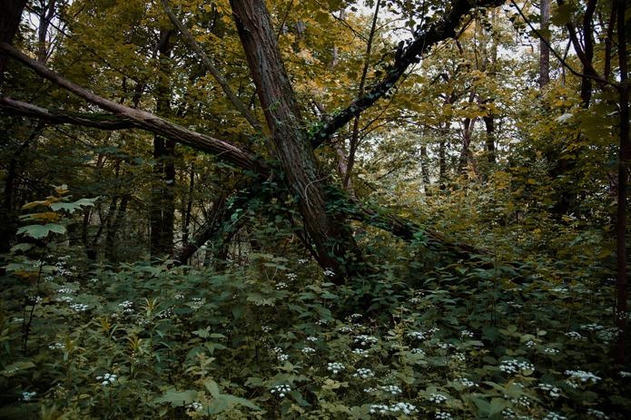 Wald #1 – 6