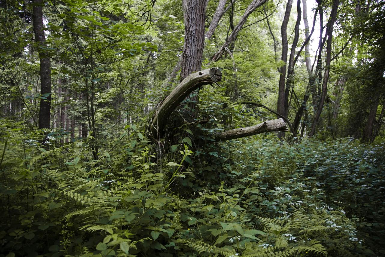 Wald4
